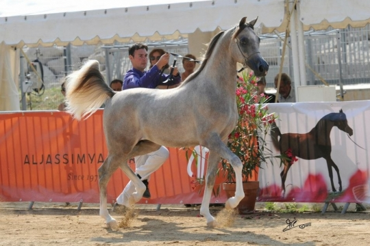 https://www.redwoodlodgearabians.com/core/image.php?src=app/media/uploads/website/30/photos/website_horses/2207/IMG_0571.JPG&width=540&height=360