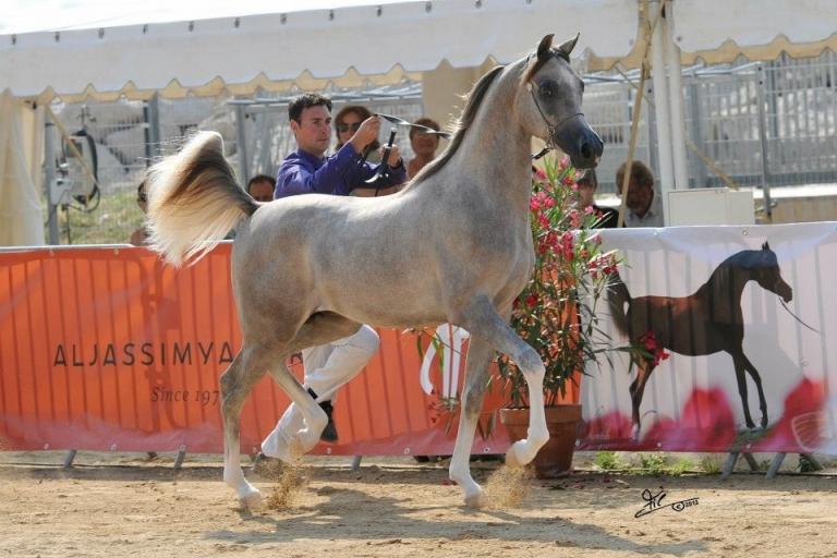 https://www.redwoodlodgearabians.com/core/image.php?src=app/media/uploads/website/30/photos/website_horses/2207/IMG_0571.JPG&width=768&height=512