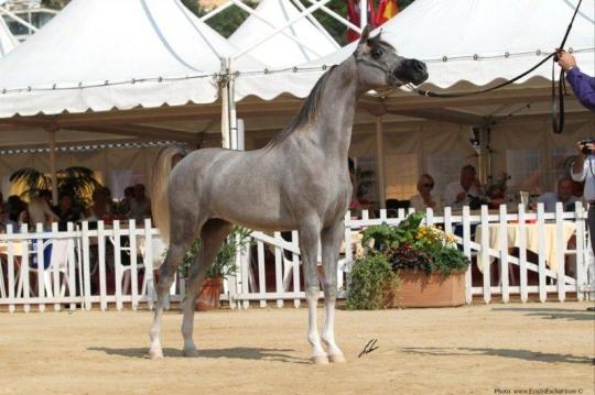 https://www.redwoodlodgearabians.com/core/image.php?src=app/media/uploads/website/30/photos/website_horses/2207/IMG_1515.JPG&width=540&height=360