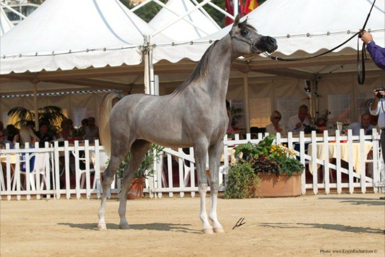 https://www.redwoodlodgearabians.com/core/image.php?src=app/media/uploads/website/30/photos/website_horses/2207/IMG_1515.JPG&width=768&height=512
